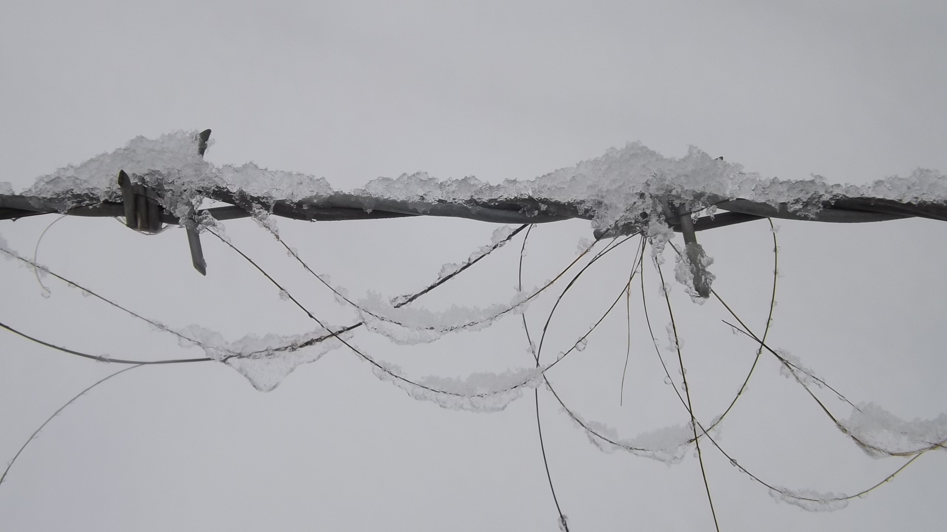 Horse hair left in a barbed wire fence. | derwentvalleyphotography