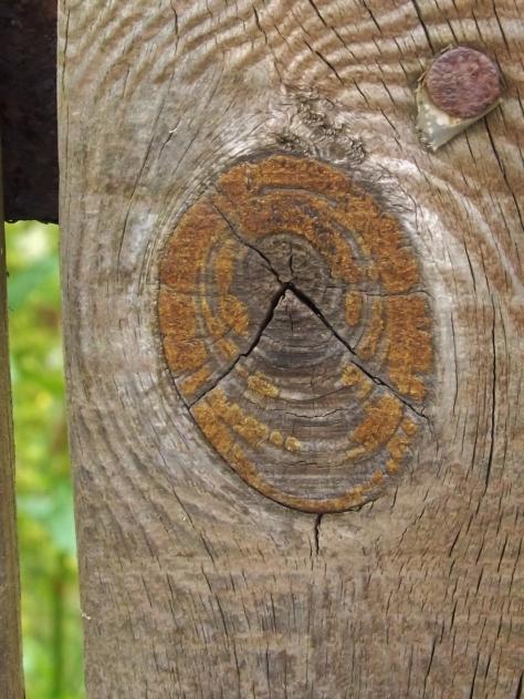 Knots on wood