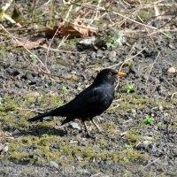 The early bird hunts the worm