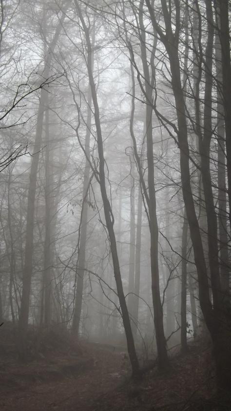 Tall thin mist